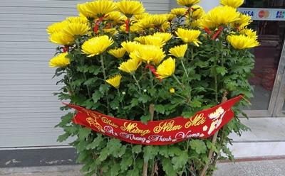 ベトナムの旧正月「テト」菊の飾り付け